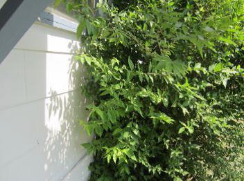 vegetation on walls
